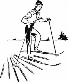 Кто ходит на лыжах лыжник